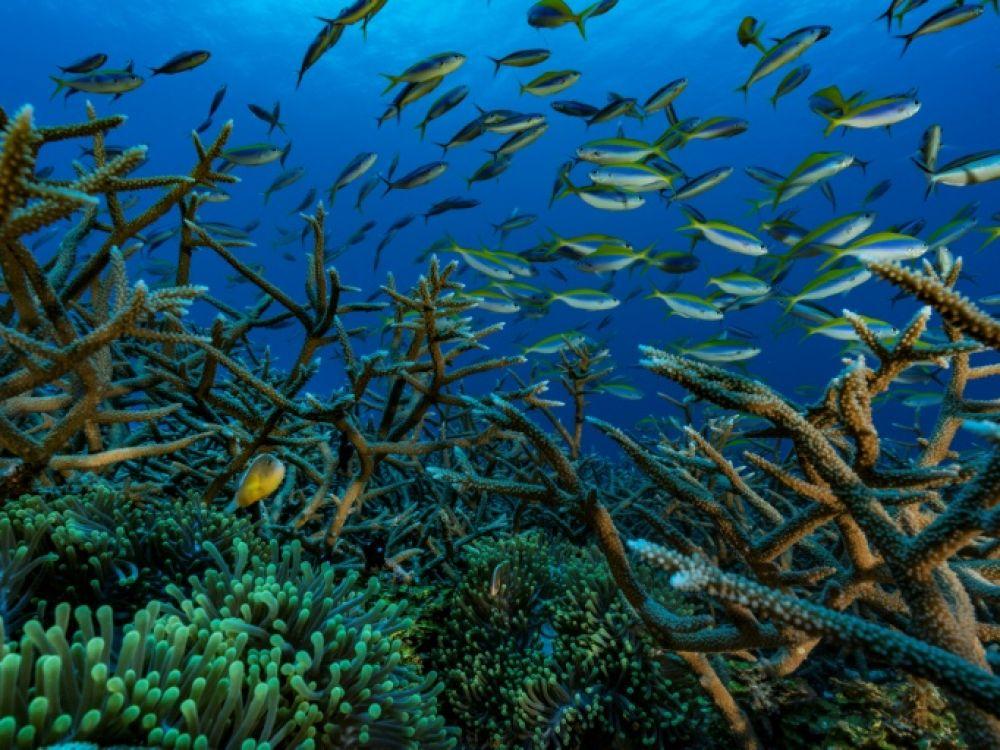 Pêche Talasani