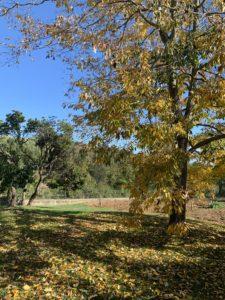 Feuilles d'automne à Talasani