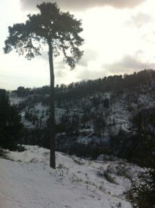 Talasani sous la neige