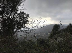 Talasani brouillard
