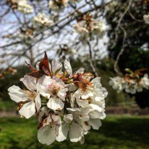 Le printemps à Talasani