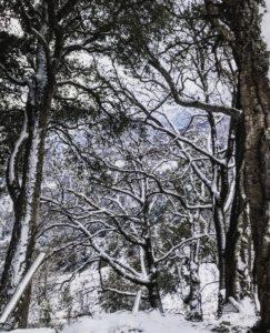 Neige à Talasani