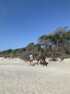 Nettoyage écologique des plages communales